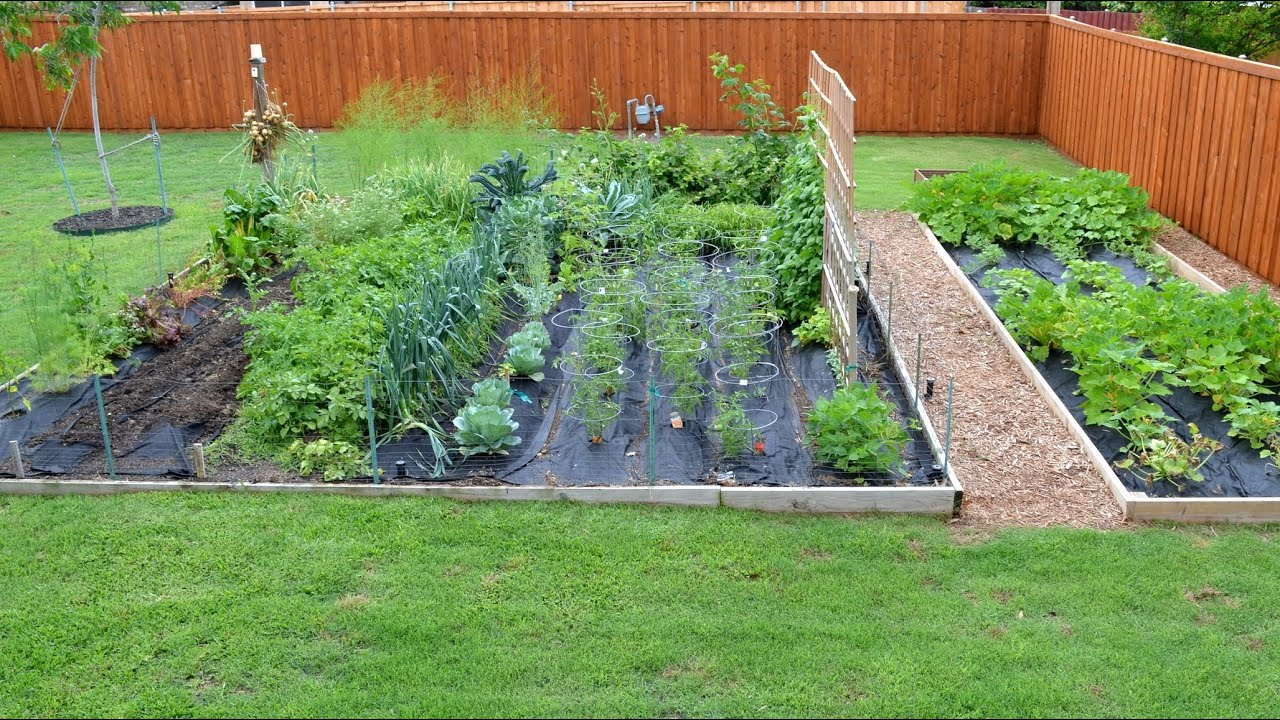 Chef's Vegetable Garden Update - YouTube