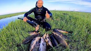 Тонны сазанов в болоте Здоровые Сибирские сазаны атакуют Лучшая подводная охота 2021 Рыбалка 2021