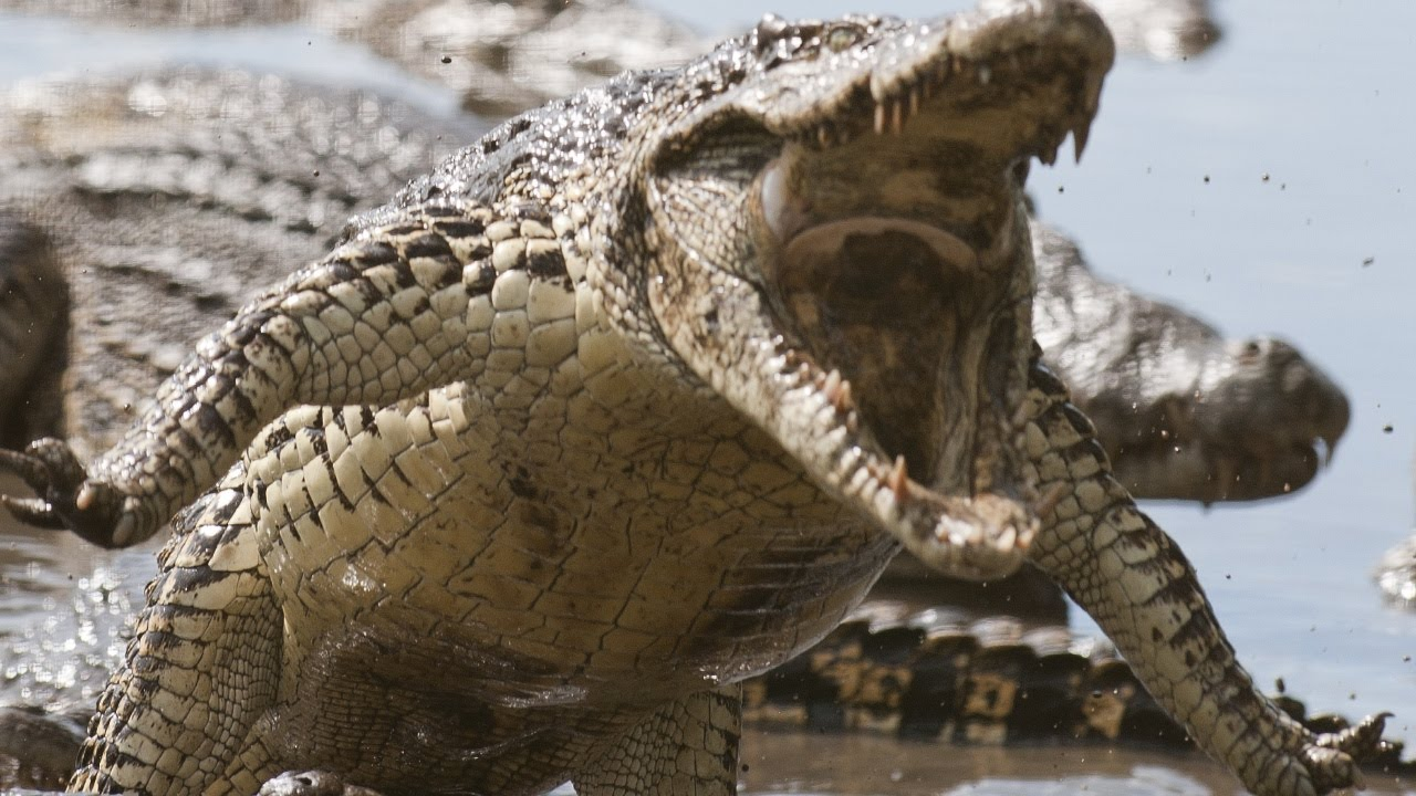 warning 10 of the world s deadliest animals youtube
