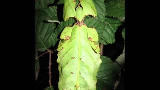 Alle Meine Liebling Insekten 1#