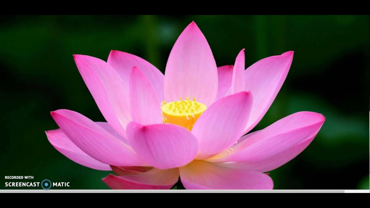 The odyssey the lotus eaters annotations p 864 865 fitzgerald youtube premium mightylinksfo