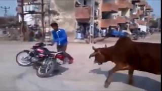 Bangladesh Pakistan and india Most Funny Animals Video Clips 2017- Funniest Videos