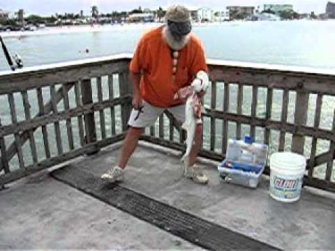 Small hammerhead off ft myers beach pier youtube for Fort myers beach fishing pier