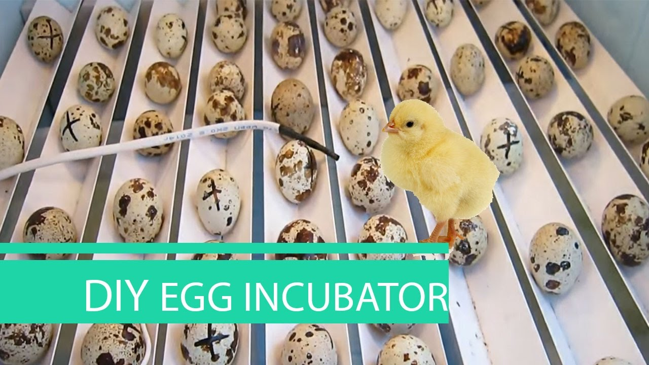 how to make an egg incubator at home