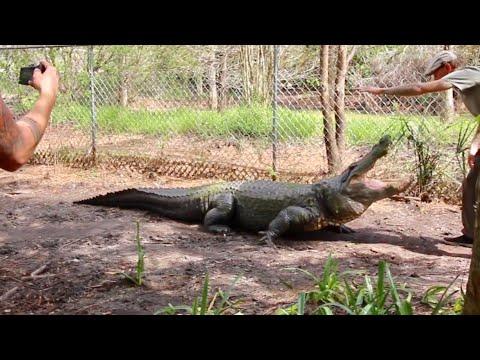 Inside Gator Enclosures at Smooth Waters Wildlife Park