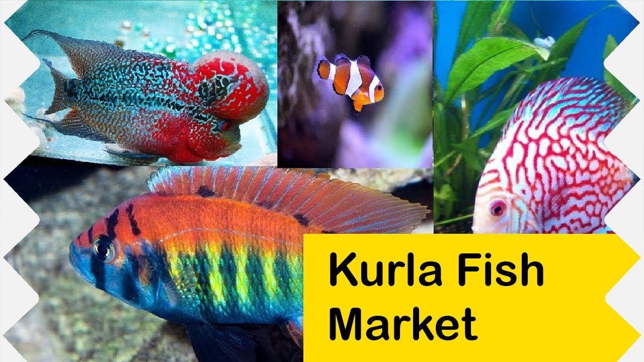 Where to buy fish at wholesale price in mumbai kurla for Fish to buy