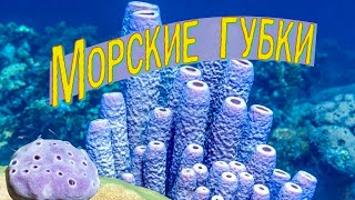 Морские губки | Познавательное видео | Удивительный мир беспозвоночных