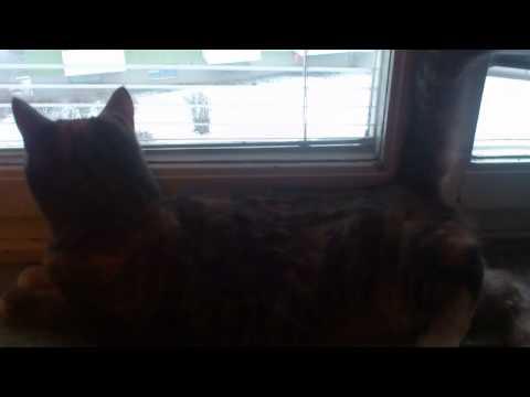 katt med pratig svans
