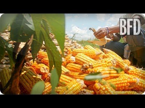 Attack of the Killer Corn! Farming in America  | BFD | TakePart TV
