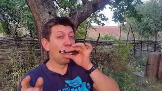 Бенд на шестом отверстии .Урок #31.How to play the blues on the harmonica.