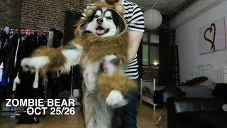 ZOMBIE BEAR - VLOG October 25/26 Thumbnail