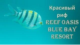 риф Reef Oasis Blue Bay Resort Риф Оазис Блю Бэй Резорт 2020 Шарм эль Шейхе Египет