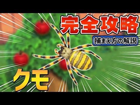 森 捕まえ 方 クモ あつ 【あつ森】クモの捕まえ方&出現時期と時間【あつまれどうぶつの森】