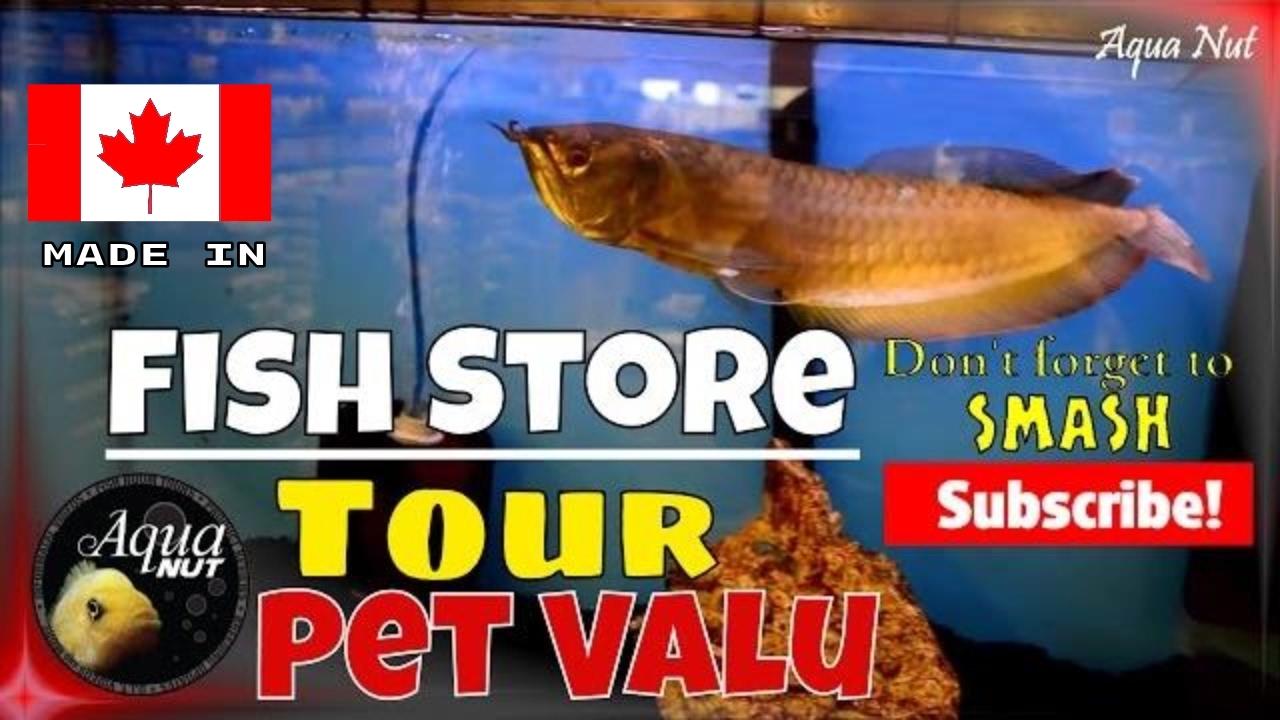 Aquarium fish tank shop - Local Aquarium Fish Tank Shop Store Walk Through Tour Of Pet Valu