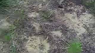 mortalité abeilles toulouse 2007