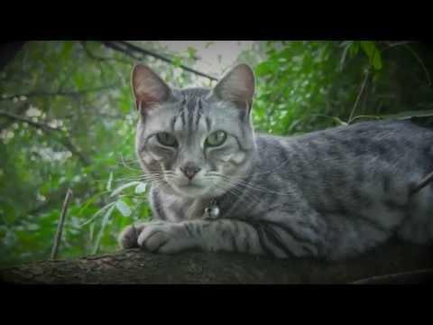 Kittycams