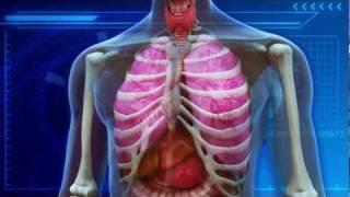 Smoking marijuana does not harm lungs: study says