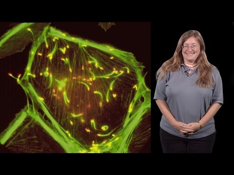 Julie Theriot (Stanford, HHMI) 1: Protein Polymers, Crawling Cells And Comet Tails