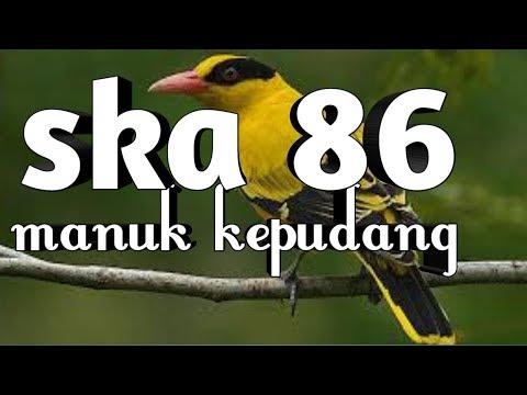 ska-86-manuk-kepudang(lirik)