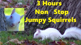 Your Pets Favorite Video ! ENTERTAINMENT FOR CATS AND DOGS . Hungry Squirrels