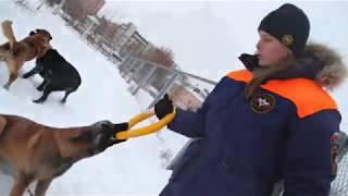 Служебные собаки казанских спасателей