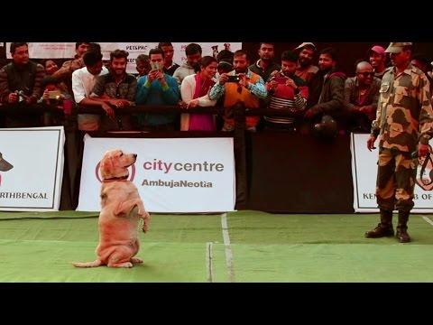BSF Dog Sqad following instruction
