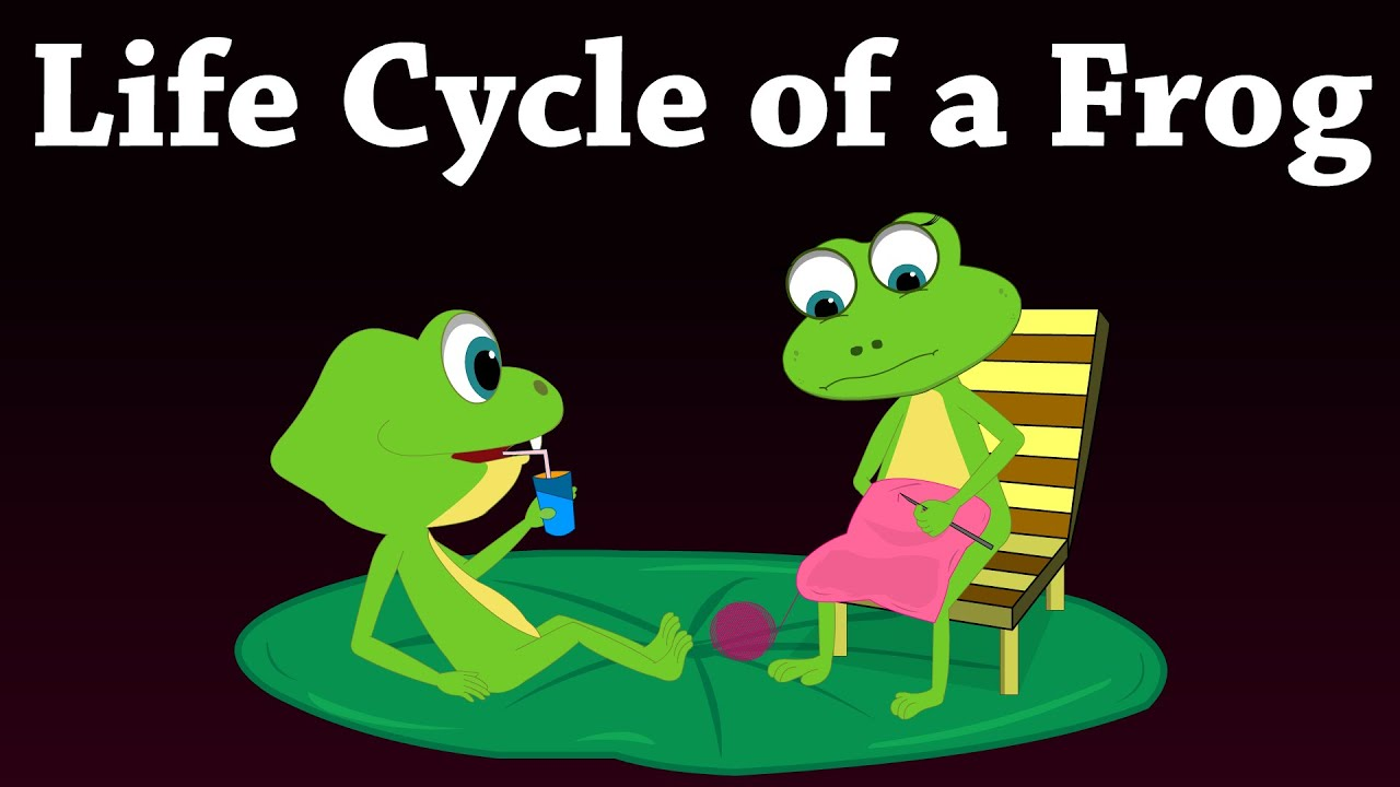 Life Cycle Of A Frog Aumsum Kids Education Lifecycle Frog