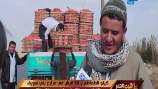 على هوى مصر - كيلو الطماطم ب 30 قرش في مزارع بني سويف والفلاحين والتجار حلمهم فتح التصدير