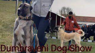 Dumbraveni Dog Show 2021