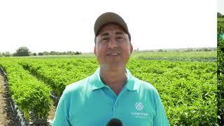 Иновации от CORTEVA AGRISCIENCE™ в зеленчукопроизводството