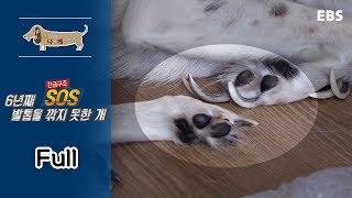 [Full] 세상에 나쁜 개는 없다- 긴급구조 SOS 6년 째 발톱을 깎지 못한 개