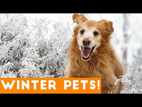 Funniest Winter Pet Video Compilation December 2017 | Funny Pet Videos