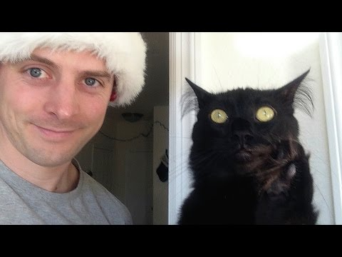 'Selfies' Bad Luck for Black Cats