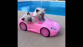 Котята смешные_ приколы с кошками