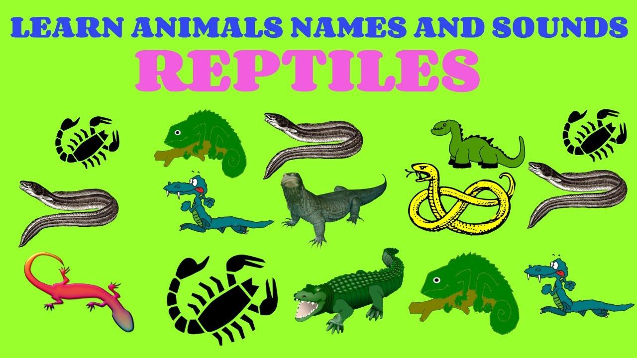 Reptiles Animals Names