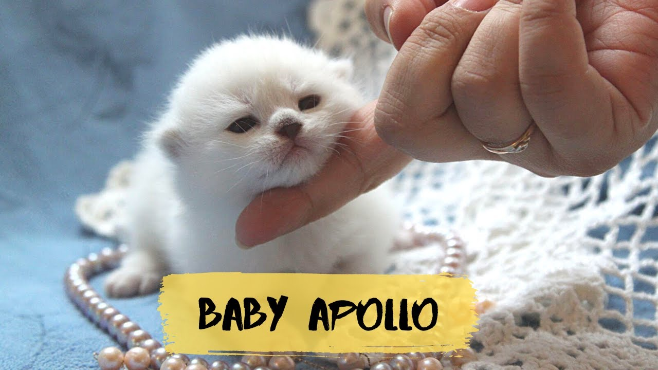 Baby Apollo 7 years ago