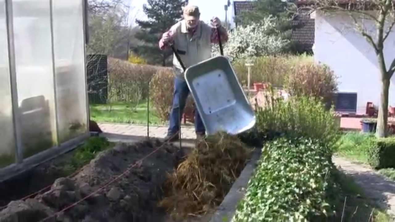 Gewachshaus Vorbereiten Mist Kompost Dunger Gewachshaus Hochbeet