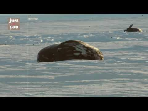 Investigación espacial en la  Antártida