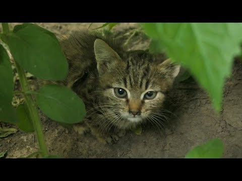 A little kitten hides from me in bushes and pipe