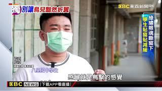 獨家》鳥類隱形兇手「窗殺」 台灣現無「友善鳥類玻璃」入法 @東森新聞 CH51