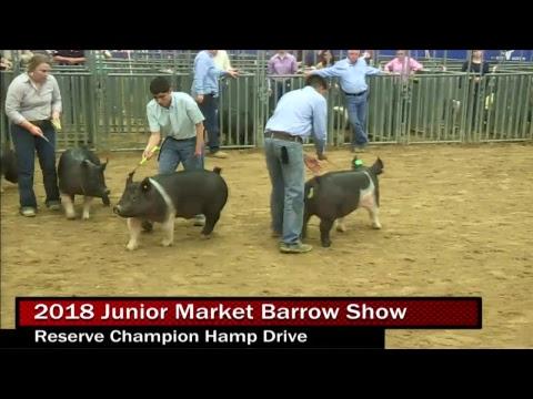 2018 Junior Market Barrow Show Day 1