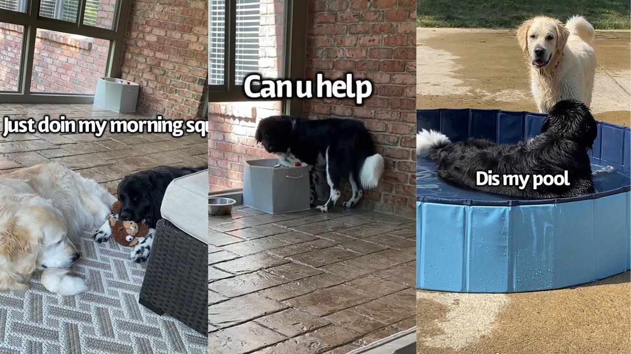 Dog Annoys Big Brothers