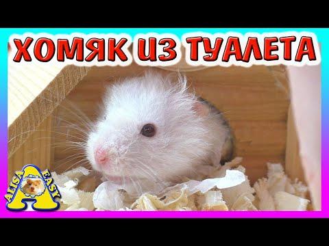 БУБА - УПЕРТЫЙ ХОМЯК / КОТ ВАСЯ ПРОБУЕТ ЧЕРВЯКОВ / УПРЯМЫЕ Хомки / Hamster Maze / Alisa Easy Pets