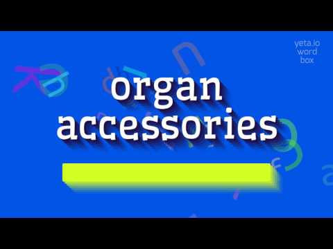 "How to say ""organ accessories""! (High Quality Voices)"