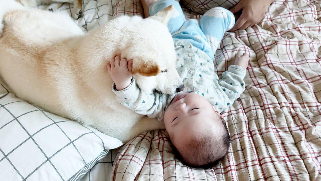 서로 너무 좋아하는 아기와 강아지
