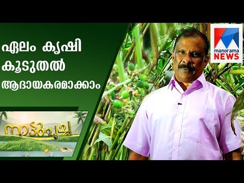 How to Make Cardamom cultivation more Profitable | Nattupacha | Manorama News