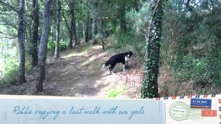 Dog Friendly Holidays In France