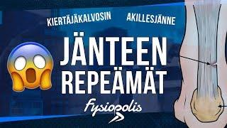 JÄNTEEN REPEÄMÄ - Kiertäjäkalvosin | Akillesjänne