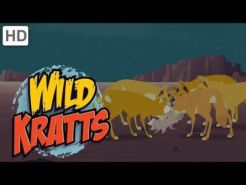 Wild Kratts  Creatures of the Night