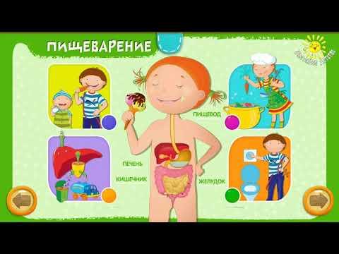 Анатомия для детей - строение тела человека просто и понятно